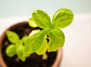 How to Grow Plants in Your Apartment