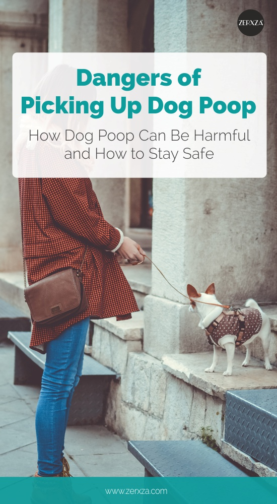 Dangers of Picking Up Dog Poop - How Dog Poop Might Be Harmful