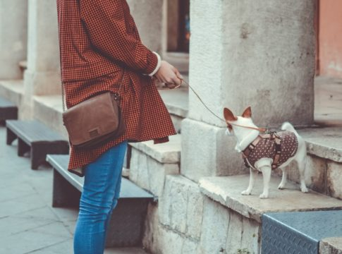 Is It Dangerous to Pick up Dog Poop