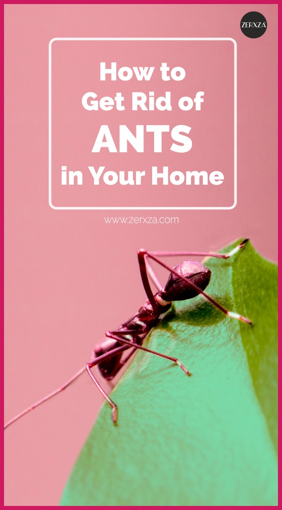 How to Get Rid of Ants - Simple Foolproof Tips